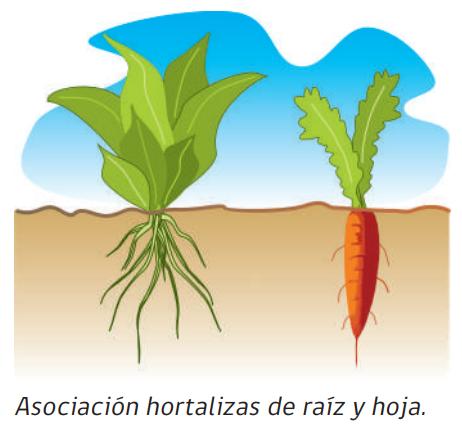 especies hortícolas