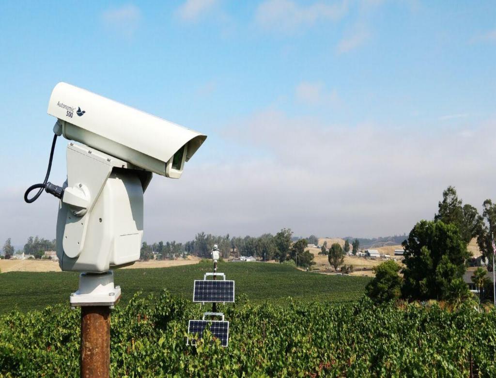 La tecnología que recomiendan productores chilenos para controlar las plagas de aves