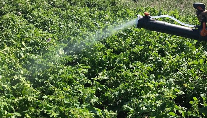 Desarrollan bioestimulante que aumenta el rendimiento de los cultivos en un 35%