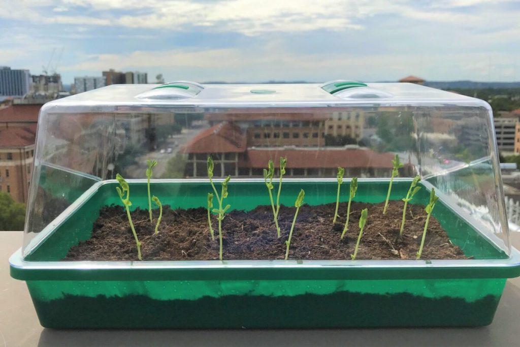 Nuevo tipo de suelo extraería agua del aire aumentando tierras cultivables