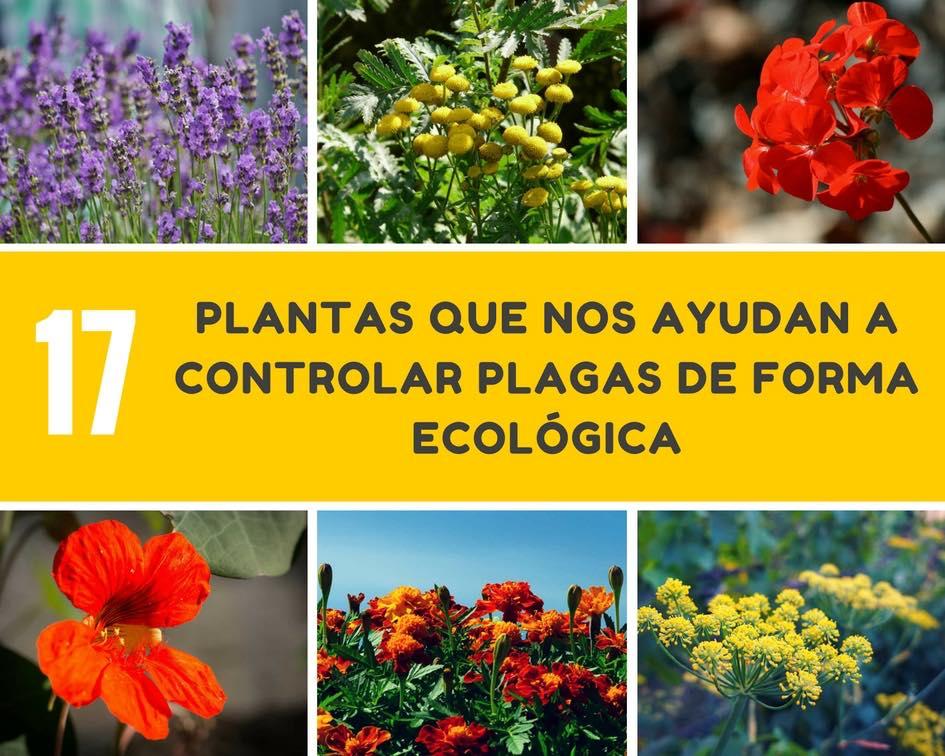 controlar plagas de forma ecológica