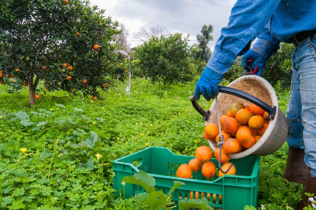 Perú: Agap afirma que nueva Ley Agraria dejaría sin empleo a más de 200 mil personas