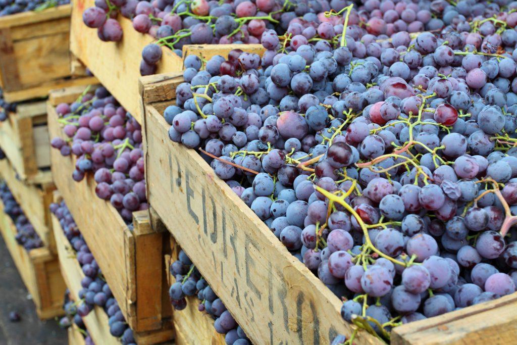 Volumen mundial de comercio de uva alcanzará récord en 2020/21 a medida que industria supere desafíos