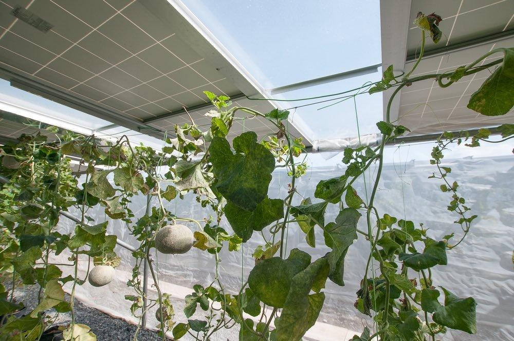 paneles solares y la agricultura