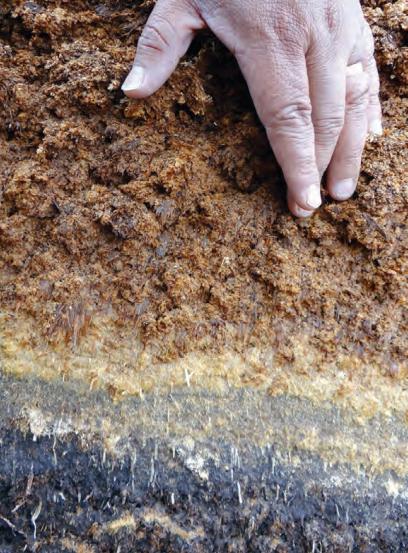 La turba rubia de Sphagnum