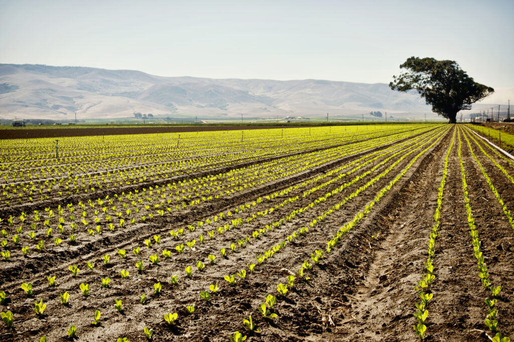 Columna de Opinión: La necesidad de innovación constante en la agroindustria