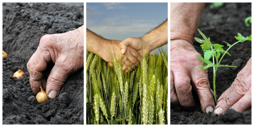 Qué es la agricultura regenerativa y cuáles son sus ventajas