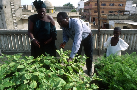 Agricultura no convencional