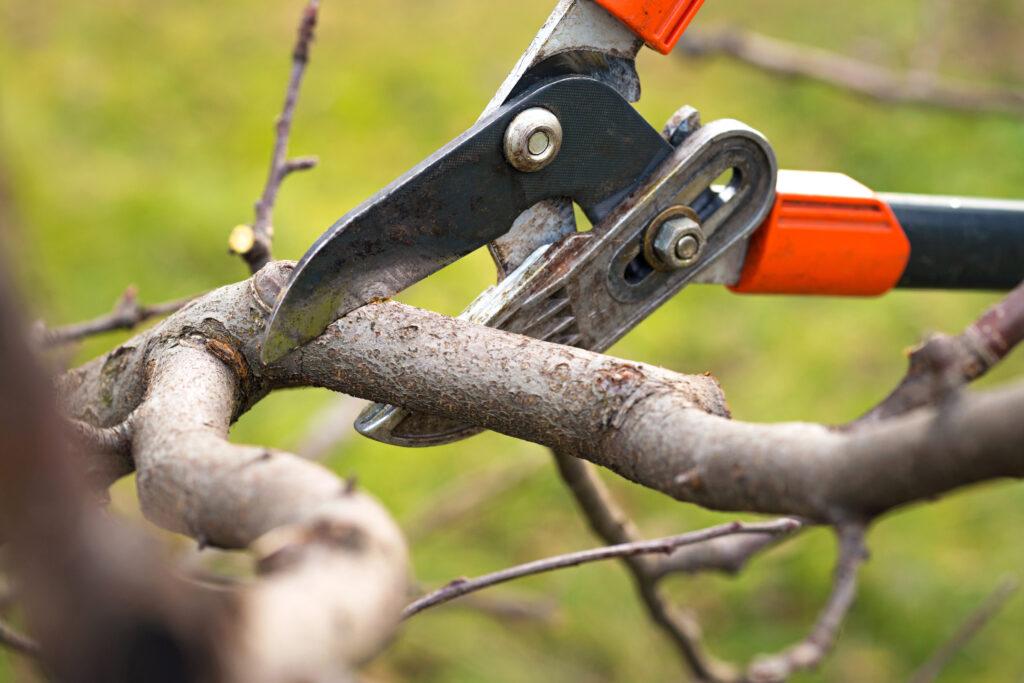 Cómo hacer cicatrizantes naturales para árboles