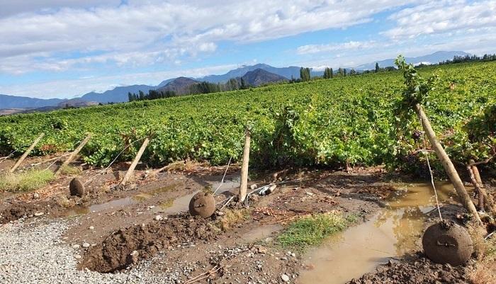 Chile: Acusan catástrofe en industria frutícola tras fuertes lluvias