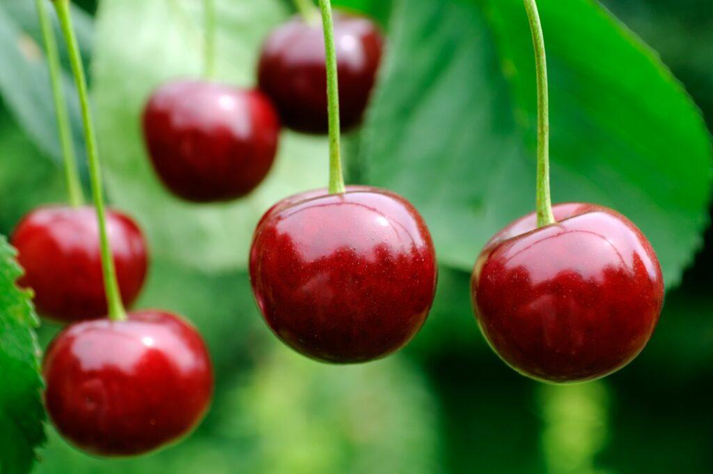 Aldi aumentará hasta un 15% la compra de fruta y verdura española, en la que destacan las cerezas