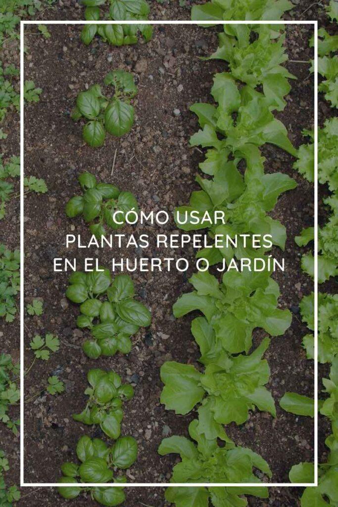 plantas relentes