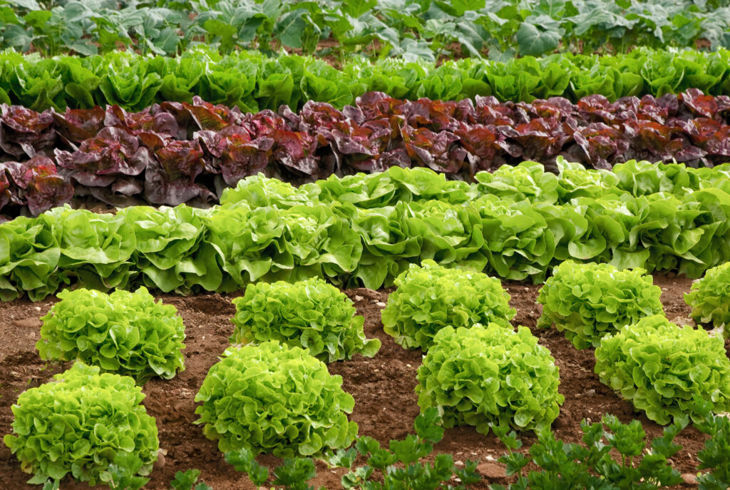 Cómo usar plantas repelentes en el huerto o jardín