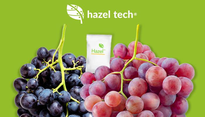 Hazel Tech propone tecnología para mantener calidad en raquis en uva de mesa para lograr mejores arribos para el productor