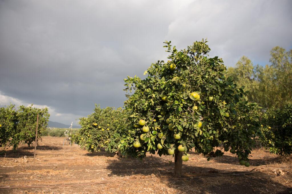 Agricultura de México se enfrenta a heladas y tormentas tropicales debido al cambio climático
