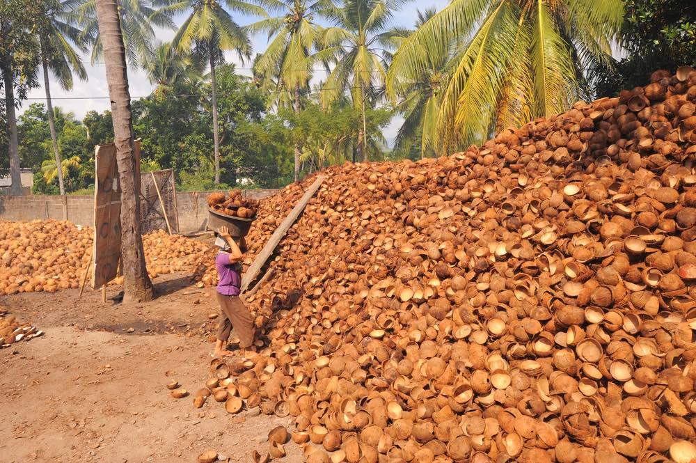 Palets de corteza de coco
