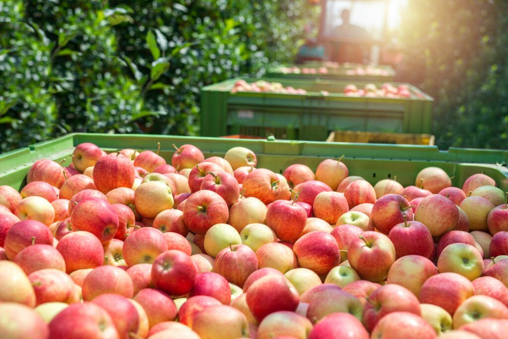 Manzanas VIP aumenta sus ventas en España