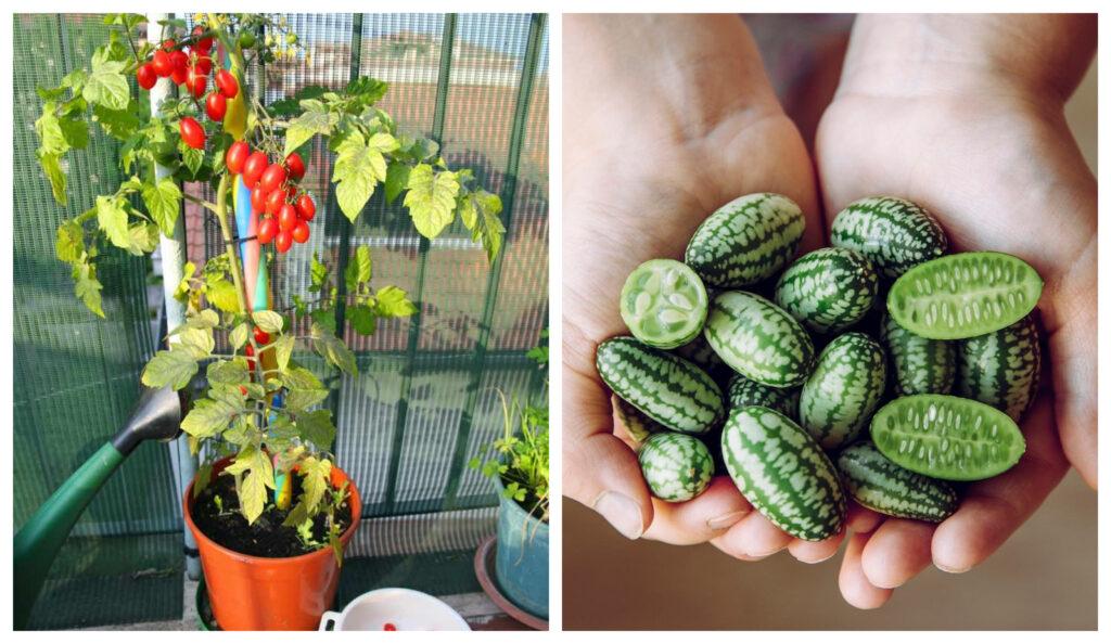 10 frutas y verduras para cultivar verticalmente con gran rendimiento