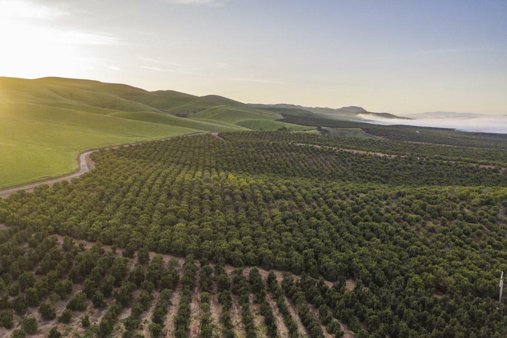 Mission Produce publica el informe inaugural de ESG