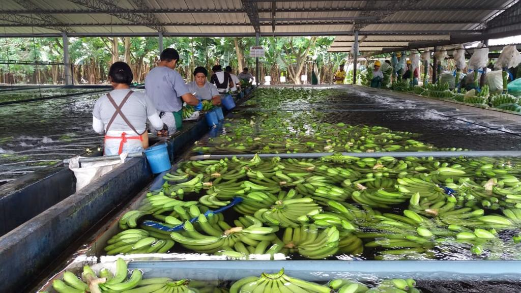 Ecuador fortalece su comercio con emisión digital de certificados fitosanitarios