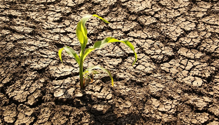 Cambio climático ha costado 7 años de crecimiento de la productividad agrícola