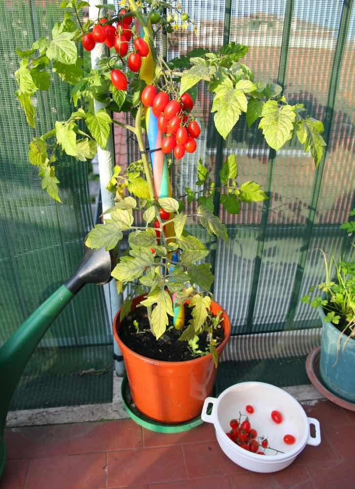 10 frutas y verduras para cultivar verticalmente