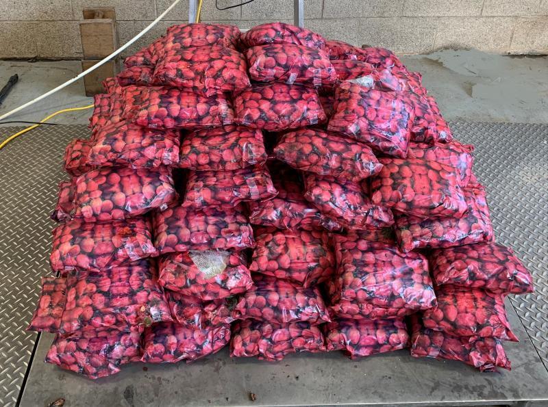 EE.UU.: Interceptan USD 8 millones de metanfetaminas escondidas en frutillas
