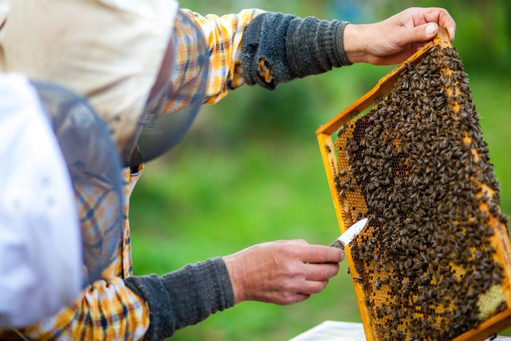 Principios básicos en Apicultura: Manejo de colmena y abejas
