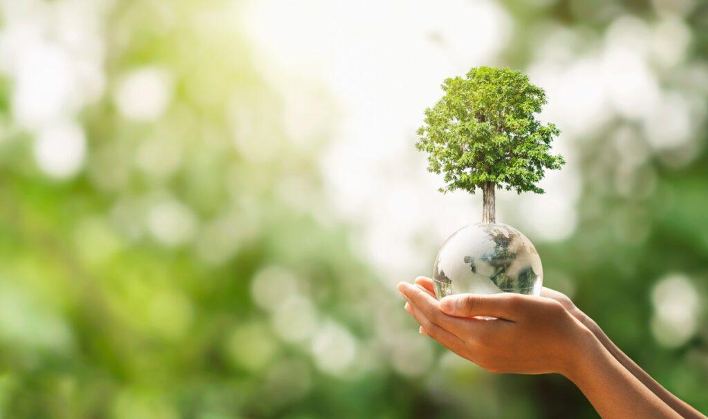 Pilares del comercio justo: Acciones de sustentabilidad en la industria frutícola