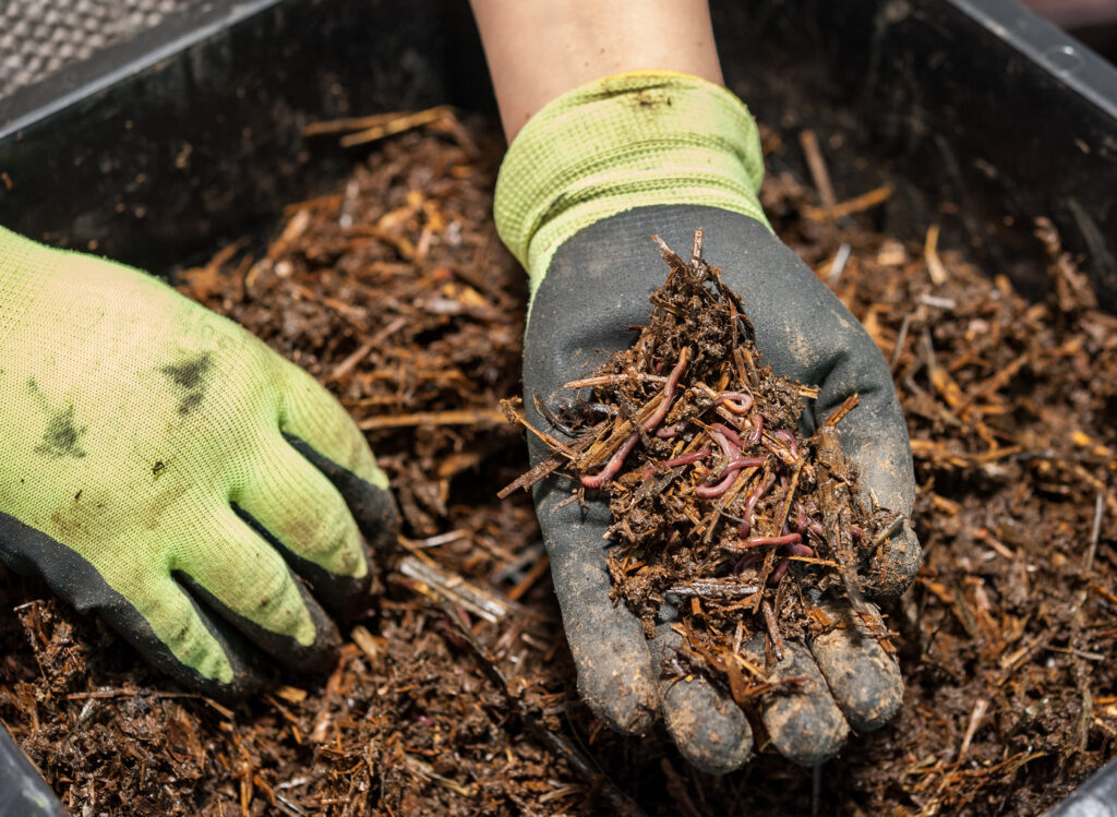 Manejo de la fertilidad del suelo: Materia orgánica y microorganismos