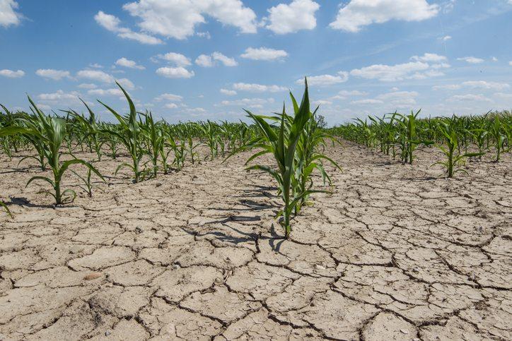 Grupos de productores reaccionan a expansión de estado de sequía de emergencia en California