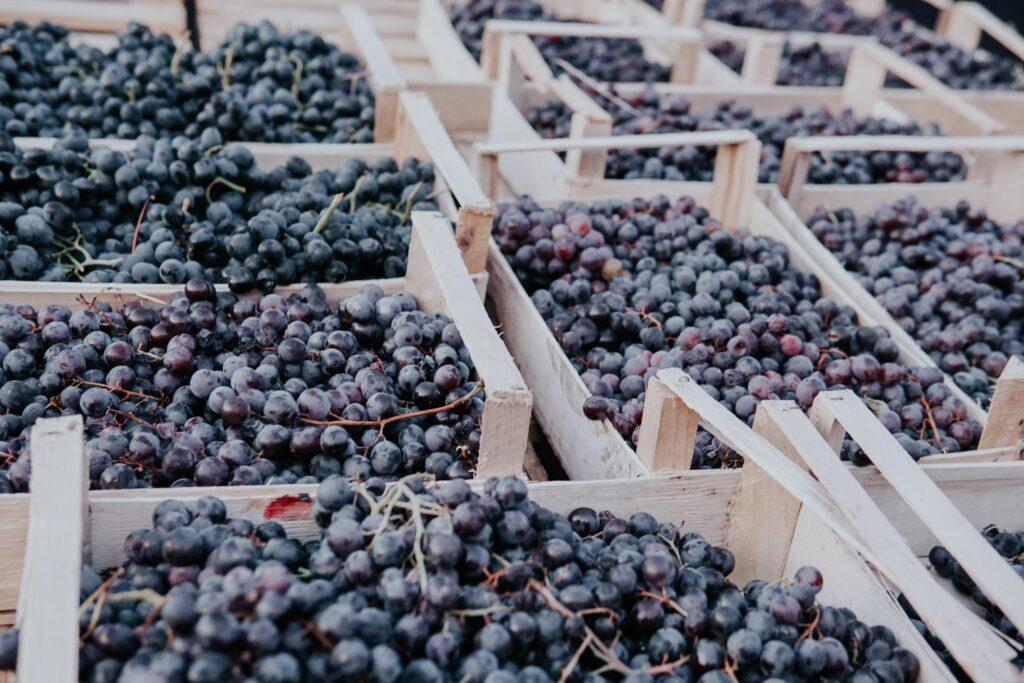 Exportaciones peruanas crecen 13.7% en el primer trimestre de 2021 con alza en uvas