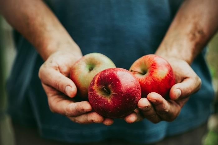 Berries y manzanas siguen siendo mejor opción para los proveedores de envasado de frutas frescas