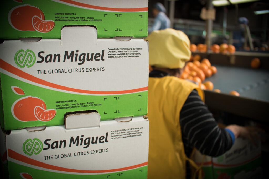 San Miguel busca consolidar su crecimiento en Norteamérica y Asia