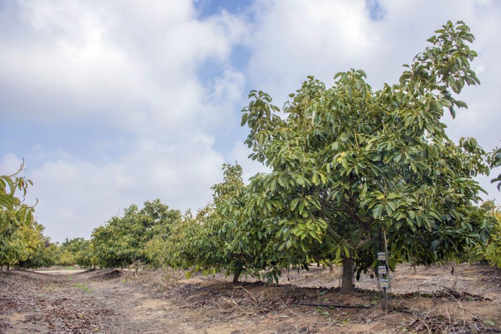 Retos y tendencias del sector agrario mexicano
