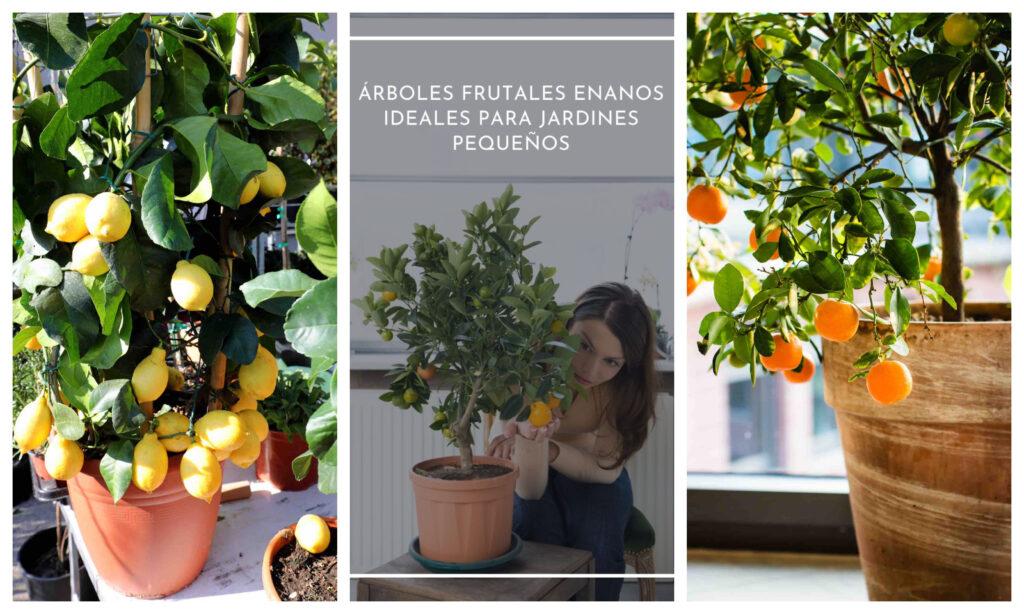 8 árboles frutales enanos ideales para jardines pequeños