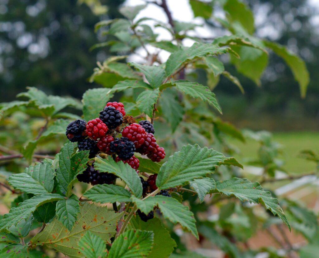 Estrategias para aumentar la biodiversidad en predios agrícolas