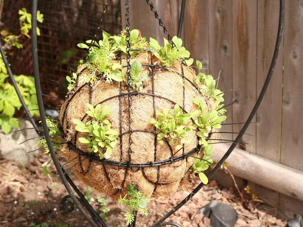 Cómo hacer una esfera de lechugas colgante paso a paso