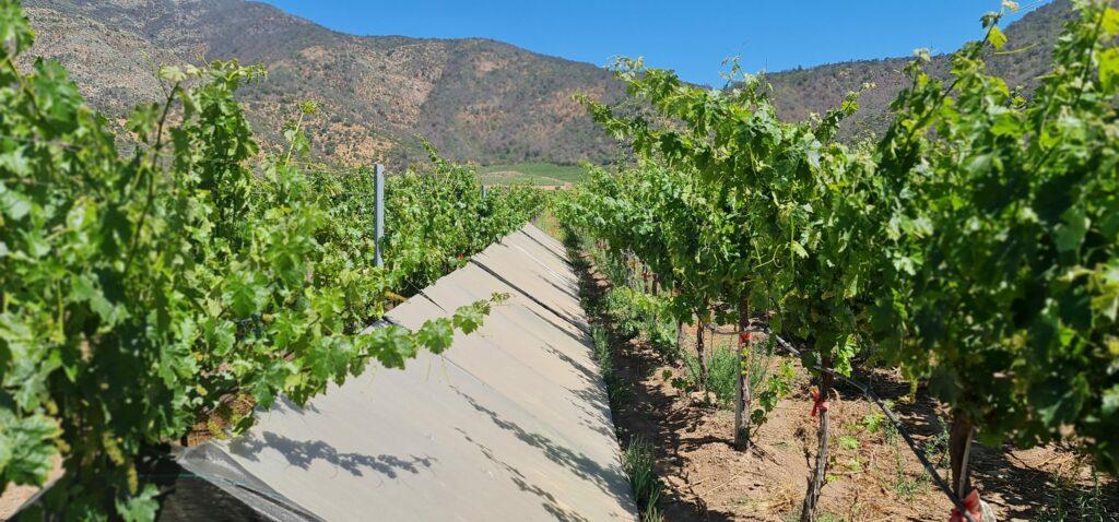 En ciclo de charlas: INIA presentará resultados preliminares sobre efectos del cambio climático en viñedos de Chile