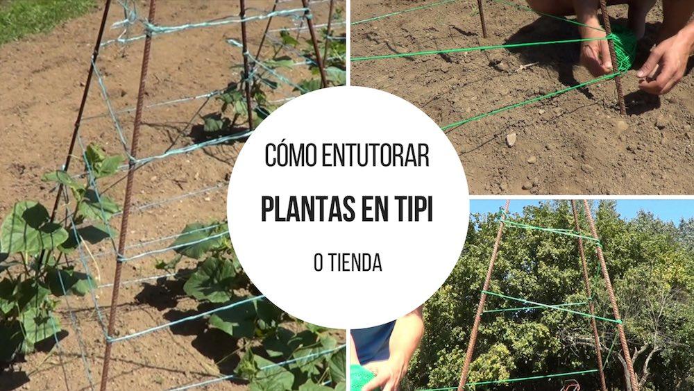Cómo entutorar plantas en pirámide o tipi (tienda)