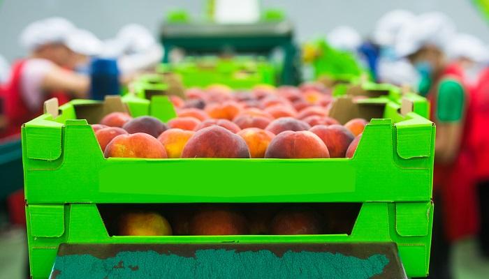 Cuellos de botella de cadena de suministro global podrían afectar al sector de servicios de alimentos hasta 2022