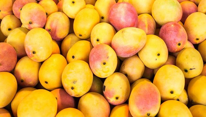Importaciones de mango de EE.UU. a fines del verano serán más bajas
