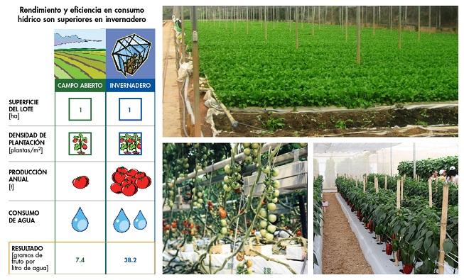 Incrementa tu eficiencia en el uso del agua en hidroponía