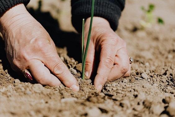 Bioestimulantes: Nutrientes para revitalizar los cultivos en un huerto