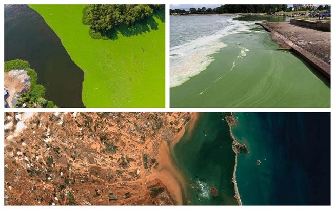 Eutrofización y el abuso de fertilizantes en el ecosistema