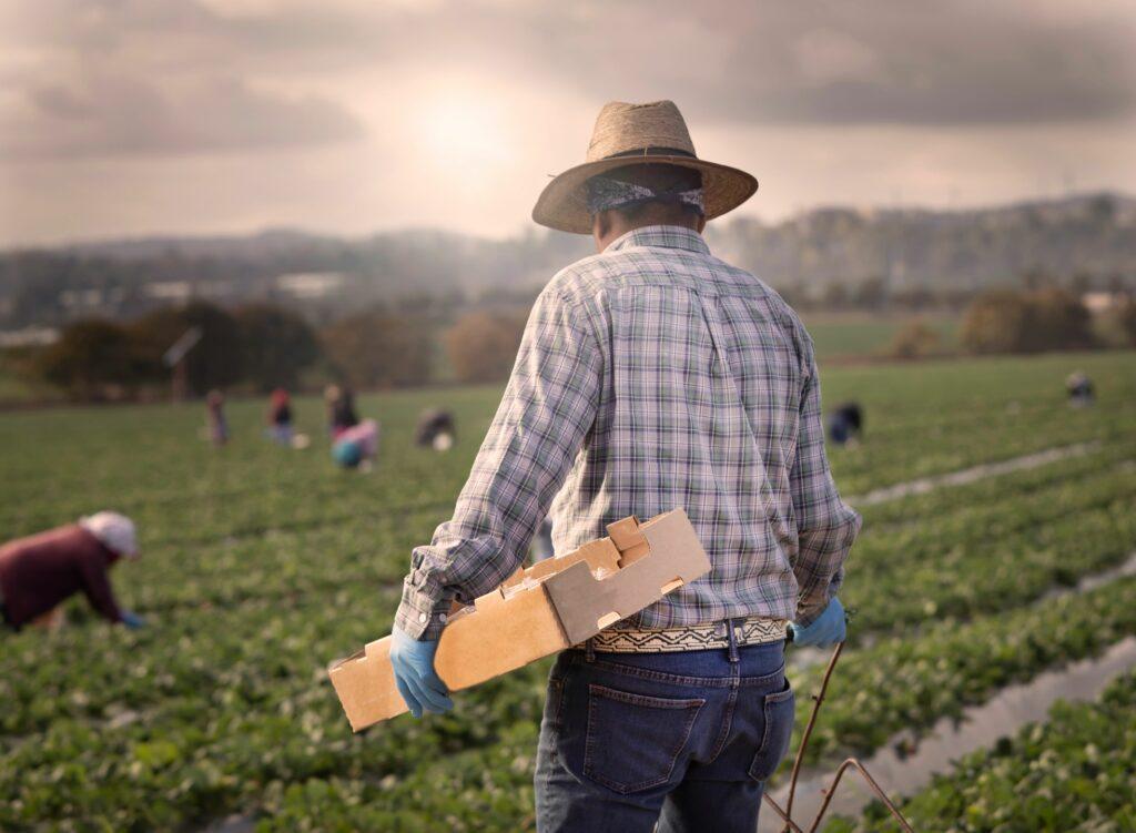 Escasez de mano de obra agrícola en EE.UU. presiona legalización de los campesinos