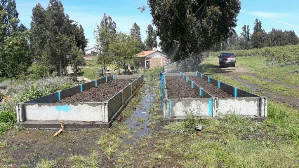 lombricultura con riego automático