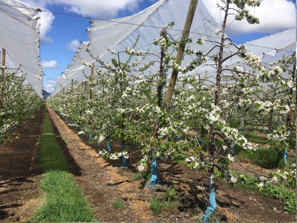 Prostart Plus de Stoller entrega brotación homogénea, sin estrés para una nueva temporada agrícola