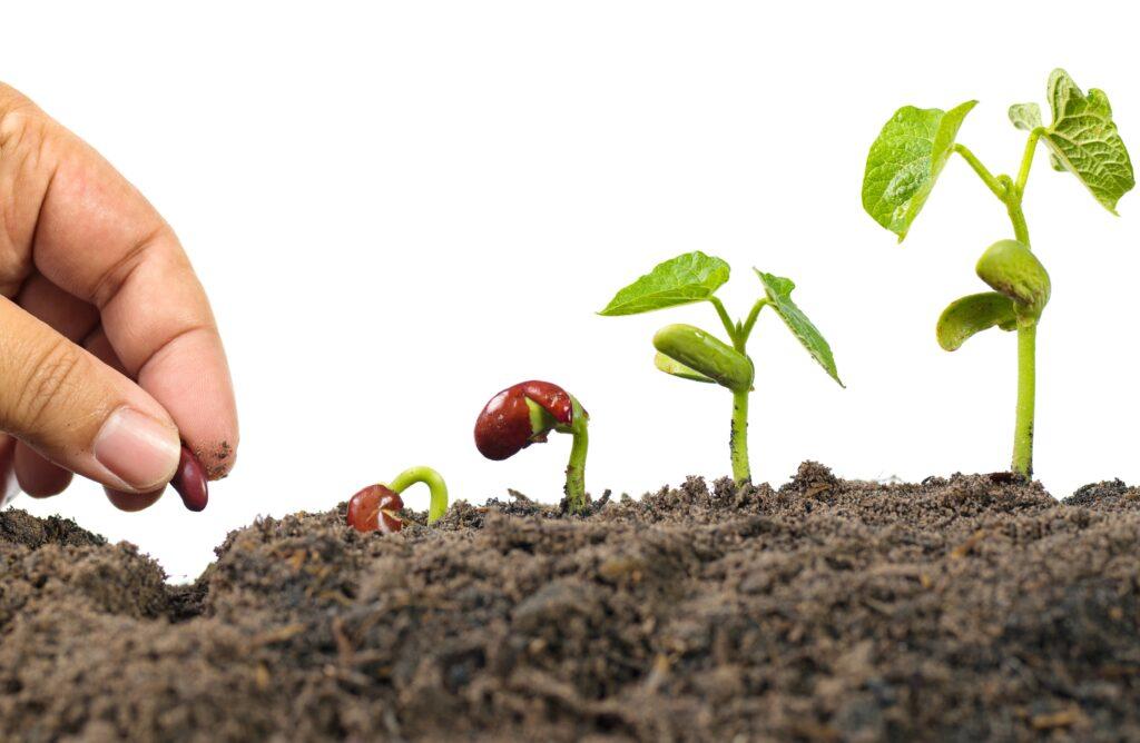 La importancia de un suelo vivo para tus cultivos
