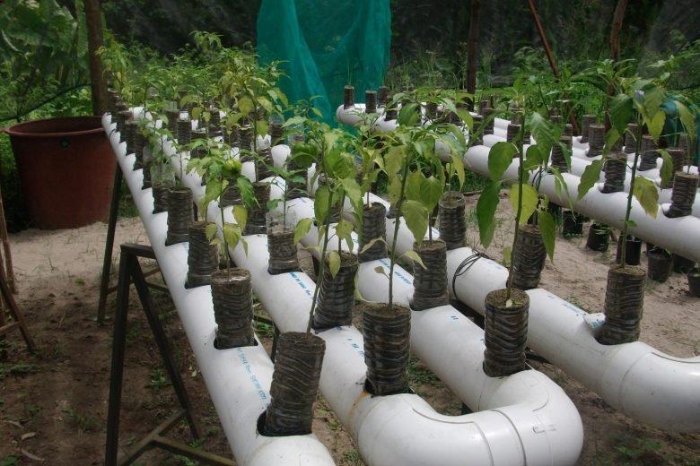 Sistema para producir 190 kilos de alimentos a bajo costo